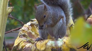 "The Happiest Squirrel -  Loves Sunflower Seeds  "" Have a great Sunday"""