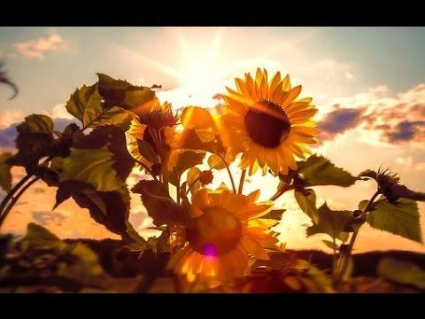 BELLE NATURE Et Douce Musique 💦 Ruisseau Oiseaux Fleurs Champs – Étude Rêverie Sommeil – 100% RELAX