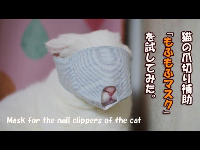 猫の爪切り補助マスクを試してみた【Scottish Fold】Nail clippers of the cat
