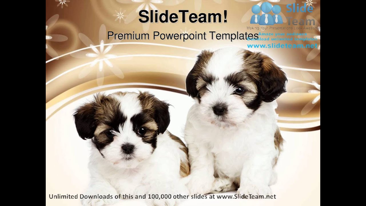 Puppy Dogs Animals Powerpoint Templates Themes And Backgrounds Ppt
