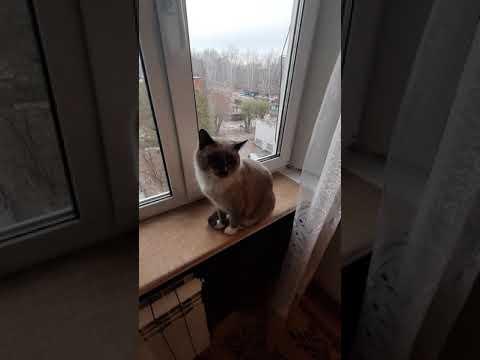 Дикий добрый кот
