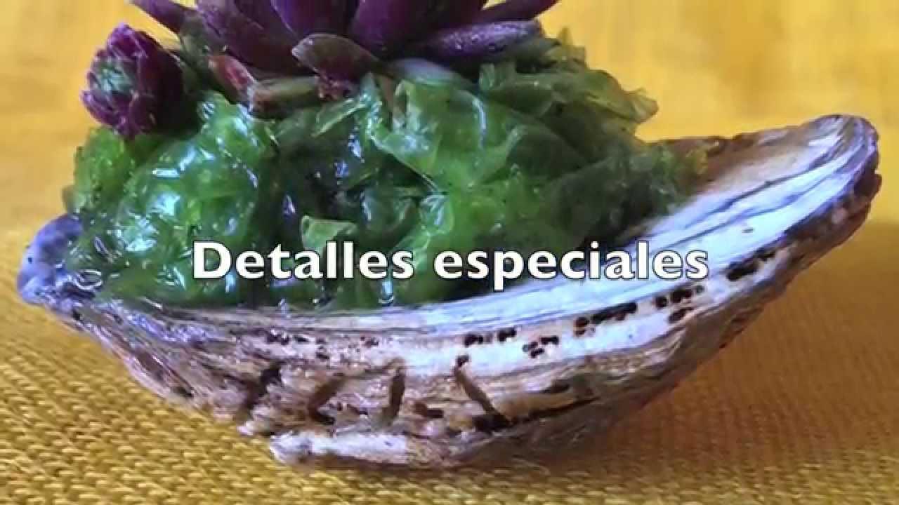 Naturplant vivero online de plantas suculentas for Vivero plantas online