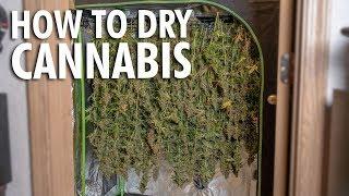 Building a Budget Dry Room - Harvesting & Drying Marijuana
