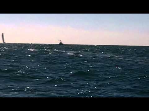 Départ de la Velux 5 Oceans Race