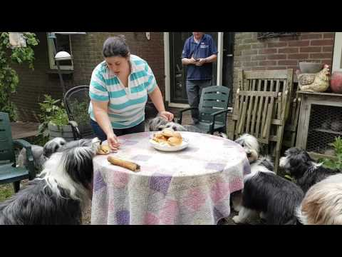 Bearded Collie birthday party