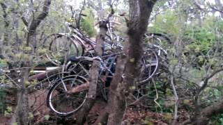 Bikes Tied In Trees?