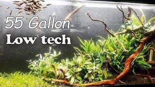 EASY Low Light Planted Aquarium- Impulsive Aquascaping