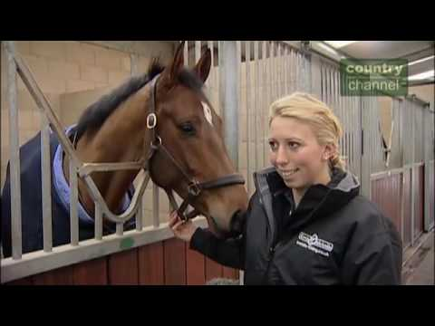 An duction to Pat Parelli natural horsemanship trainer