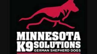 German Shepherd Puppies Minnesota.wmv