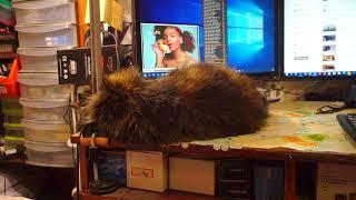 Кошка лежит одыхает и спит на моём столе, а я пою ей песенку