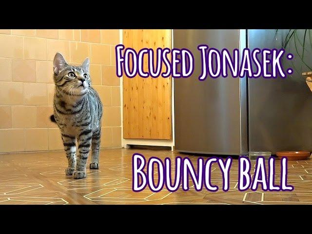 Focused kitty:  Bouncy ball