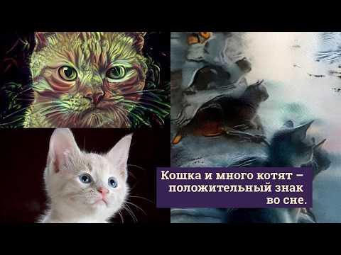 На вопрос, к чему снится рыжая кошка с котятами, сонник отвечает вполне однозначно: такое животное отображает ложь наяву.