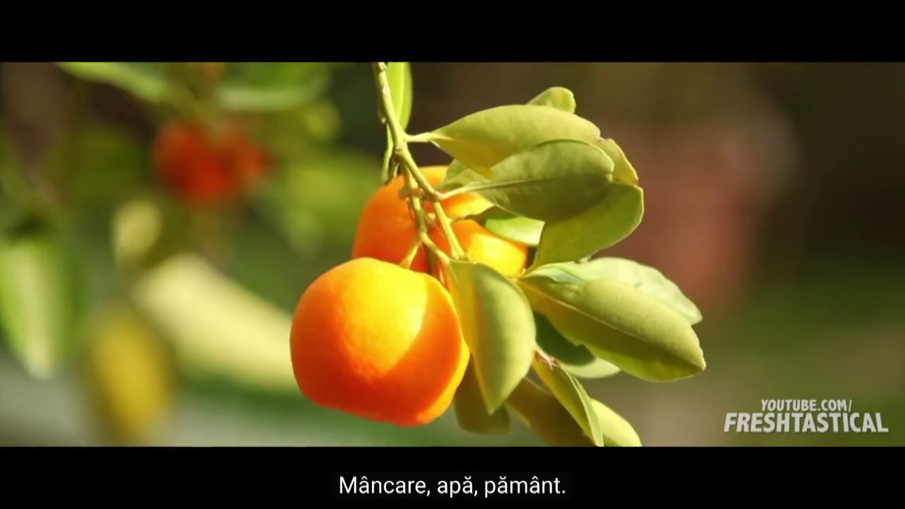 Minciuna în care trăim (Romanian Subtitles)
