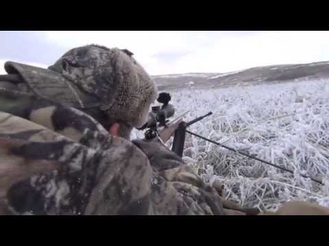Fair Chase Spot & Stalk Whitetail Deer Hunting Alberta Canada Willow Creek Outfitters