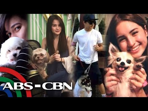 Rated K: Kapamilya celebrities show off their pet dogs