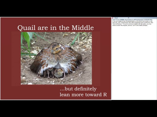 Quail Life History Reproduction - Wildlife for Lunch - January 2017