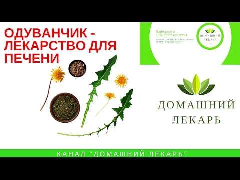 Одуванчик для печени - Домашний лекарь - выпуск №227