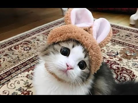 WOW - Cats and Kittens Galore. Enjoy Funny Cute Cats and Kittens Meowing Playing Videos #5