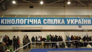 Выставка собак в Киеве