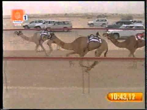 أعمار ملك هجن العاصفه سيف سمو الأمير 30 4 2008