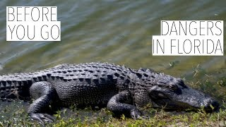 BEFORE YOU GO! 10 DANGERS IN FLORIDA!