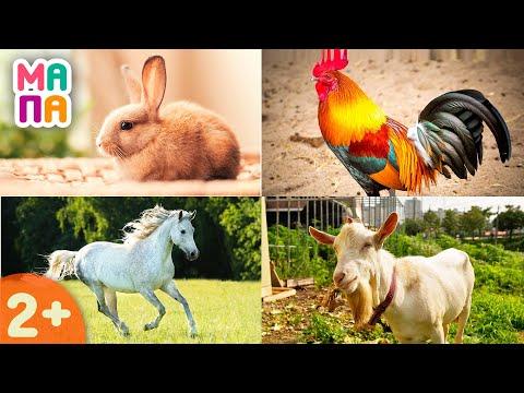 Развивающий мультик - учим животных | Для самых маленьких | Домашние животные | Карточки Домана