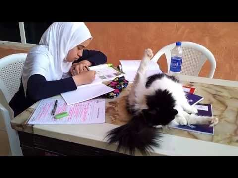 "My daughter Nora Khalaf doing her homework with our Black and White Cat ""Tussy"". Dubai"