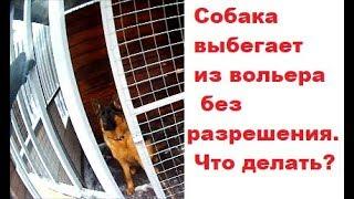 """Удержание собаки в вольере. Дрессировка собак команда """"Место""""."""