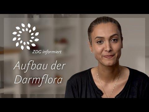 Darmflora aufbauen und sanieren | Anleitung und Erklärung