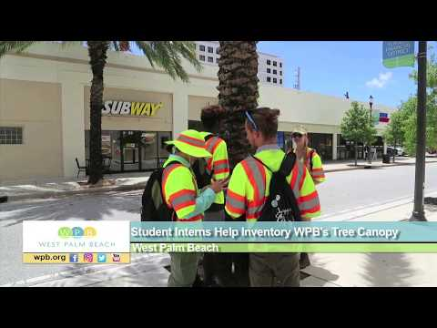 Student Interns Help Inventory WPB's Tree Canopy