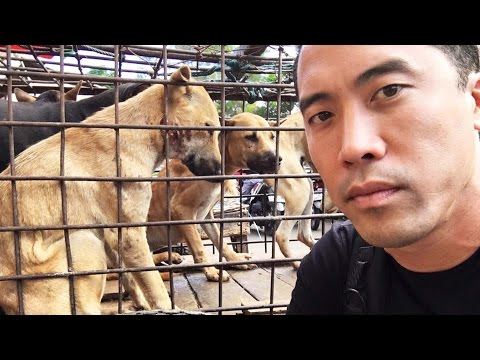 Thumbnail: This Guy Rescues Dogs From Torture And Slaughter In Asia