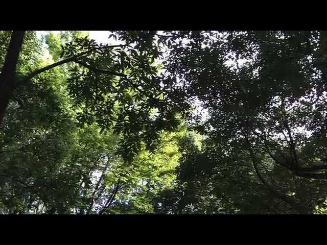 七弦独奏者  Nanagen dokusousha