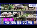 총 17종 동물을 한번에 보는 서울대공원 동물원 영상 모음 : 하마 흰코뿔소 불곰 코끼리 호랑이 표범 늑대 기린 큰뿔소 바바리양 세이블앤틸롭 사막여우 프레리독 미어캣 오소리