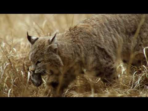 DOKU 1080p: Amerikas Naturwunder - Yosemite