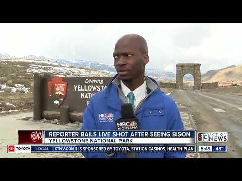 TRENDING: Reporter Bails Live Shot After Seeing Bison