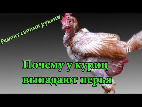 Почему у куриц выпадают перья,как избавиться от пухопероеда(клеща) без затрат