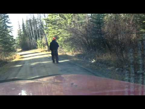 Hunting for deer ended up killing grouse Bird shooting in Canada caribou Bc