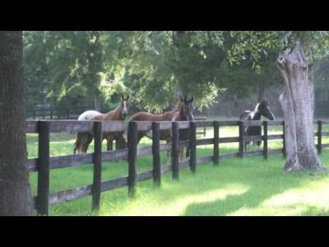 Ocala Horse Farm For Sale By Owner  Across From Hits  Owner Financing  Must See  YouTube