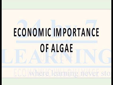 Economic Importance of Algae | Plant Kingdom | Grade 11 | Biology | 24by7learning.com