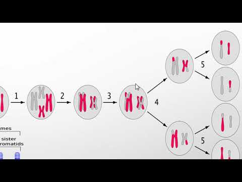 Linkage, Crossing over and recombination