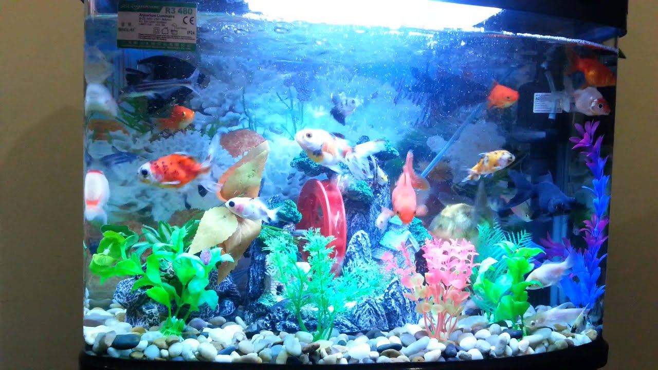 Ikan Hias Cantik YouTube