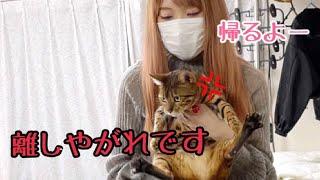猫6匹連れて5日ぶりの自宅へ帰りたいと思います!
