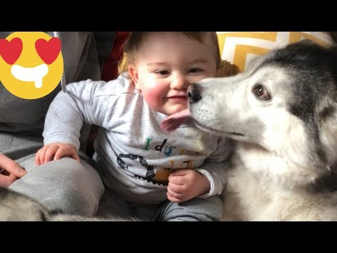 When my Baby wakes up nothing makes him Happier than the Huskies!!....