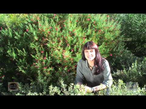 Australian Garden Habitats for Small Aussie Birds