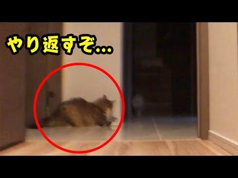 飼主が寝たあと猫がやりたい放題してることが判明!