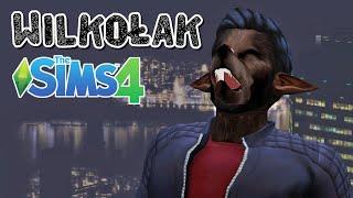WILKOŁAK w The Sims 4  test moda!