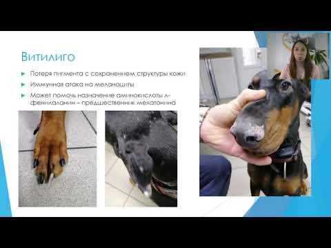 Семинар для заводчиков Болезни кожи собак 2020.05.20