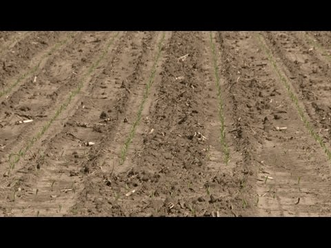 Yield Loss from Weeds - Peter Sikkema - April 7, 2017