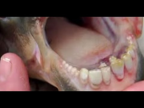 Fish With Human Teeth Found In New Jersey Youtube