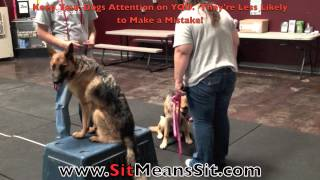 "Dog Aggressive Gsd Lesson 2 ""muneca"", (sms Las Vegas Corporate)"